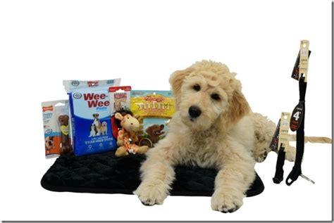 Ee  Puppy Ee   Starter Kits For Your New  Ee  Puppy Ee   Istas Ramblings