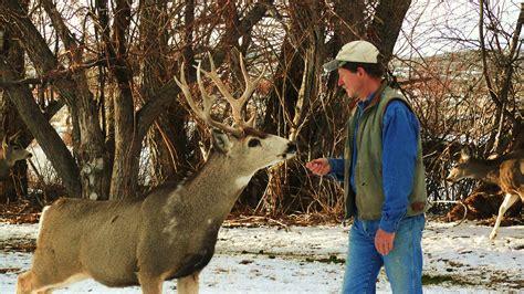 touching  wild  living   mule deer