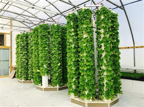 Aeroponics In Agriculture To Boost Food Security
