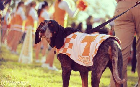 Smokey, Adorable Mascot Of The #vols