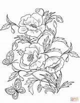 Coloring Poppies Pages Blossom Poppy Flower Printable Drawing Amapolas Para Colorear Adult Flowers Drawings Dibujos Flores Painting рисунки Supercoloring Gratis sketch template