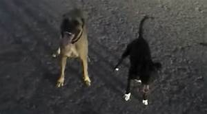 Police ficer Handles 2 Vicious Dogs Like An Absolute Boss