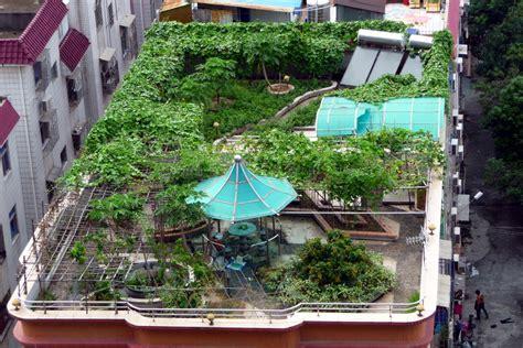 how to rooftop garden how to start a rooftop garden