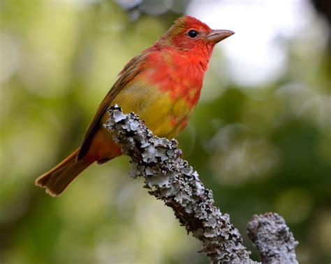 ou study demonstrates seasonality of bird migration in
