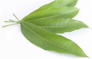 17 Proven Health Benefits of Mango Leaves (No.1 Potent ...