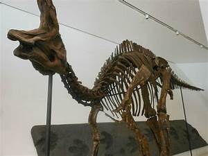 1000 Images About Dinosauricon C Corythosaurus On