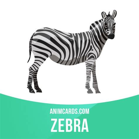 animals related zebras native africa hoofed horses closely very ingles estudo single zebra