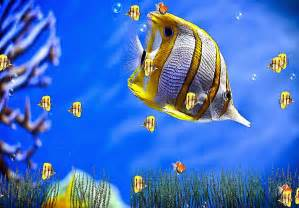 Aquarium Wallpaper Animated Free - 3d sea screensaver wallpaper best free hd wallpaper