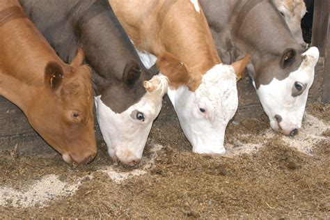 Animal Nutrition Industry Updates From Around The World