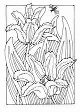 Coloring Flower Cool Edupics sketch template