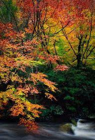 Fall Autumn Smoky Mountains