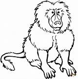 Baboon Coloring Pages Clipart Baboons Printable Animals Babouin Coloriage Animal Clipartpanda Imprimer Supercoloring Adult Sheet Cliparts Buffalo 20clipart Coloringbay Clip sketch template