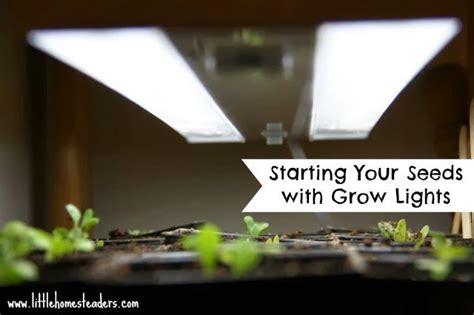 starting seeds lights starting seeds with grow lights