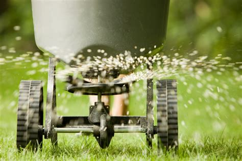 Fall Is One Of The Best Times To Plant Grass  Grillo Services