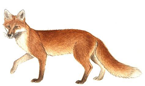 patrouille du renard agse bas rhin 67