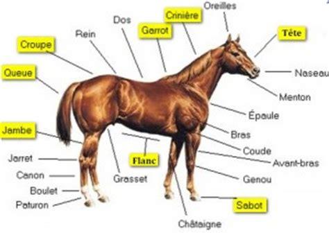 coupe banane cuisine solutions 94 d 39 un cheval