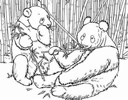 Panda Coloring Pages Bear Colouring Bears Sheets