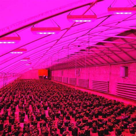grow light high quality ip65 waterproof 350w plant grow lights lowes buy plant grow lights lowes low watt