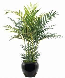 Zimmerpalmen Bilder Welche Sind Die Typischen Palmen Arten