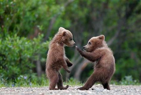 anak beruang lucugambar gambar aneh