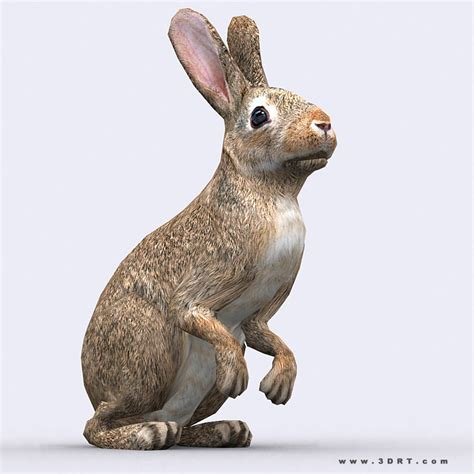 model drt hare vr ar  poly rigged animated