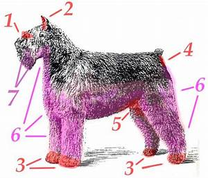 Pet Bouv Grooming Diagram