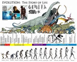 EVOLUTION: The Story of life │ The Prehistoric ERAS ...