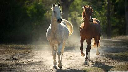 Horse Wallpapers Background Wall