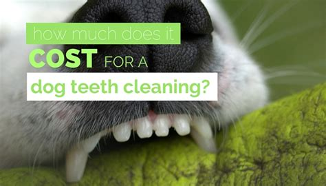 how much does it cost to clean a comforter how much does teeth cleaning cost average pricing costs
