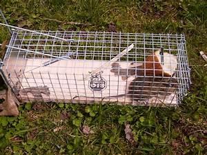 Comment Tuer Un Rat : piege a mulot taupier sur la france ~ Mglfilm.com Idées de Décoration