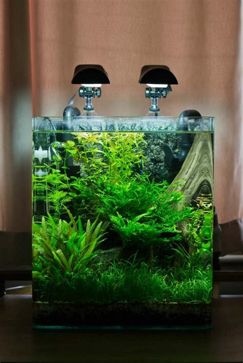 idees  astuces comment creer  nano aquarium