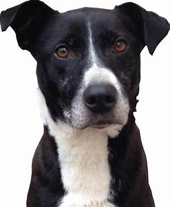 Black and White dogs head transparent background