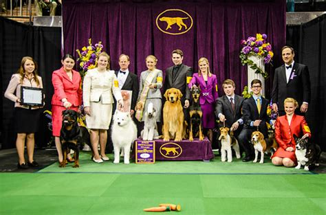 American Kennel Club Welcomes 3 New Dog Breeds To Its