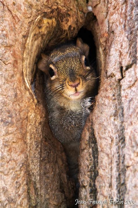 squirrel finds  safe place  check   world