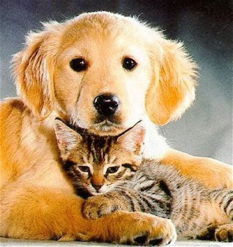 My Top Collection Cute Cat And Dog Pictures