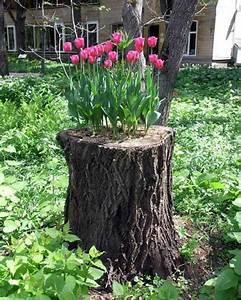 Kreative Ideen Garten : was mach ich mit meinem alten baumstumpf im garten ~ Bigdaddyawards.com Haus und Dekorationen