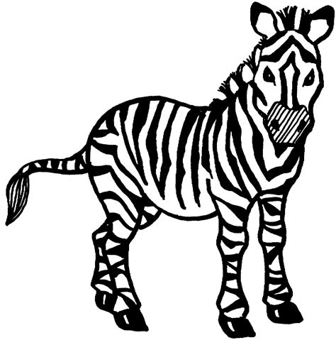 printable zebra coloring pages  kids animal place