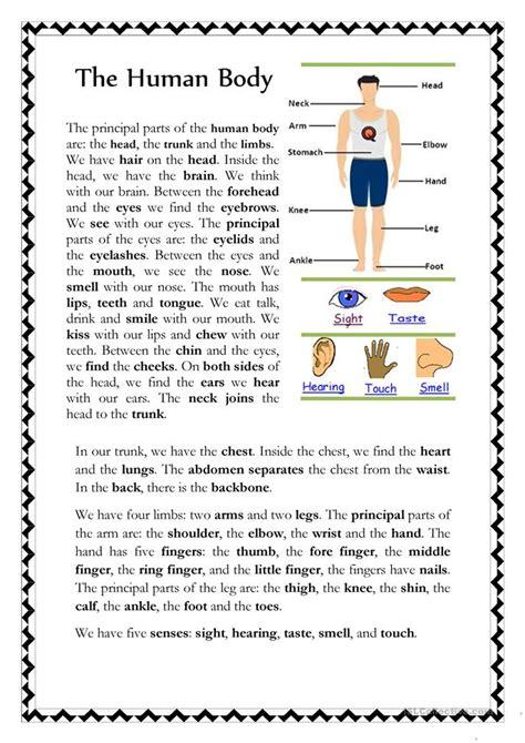 human body worksheet  esl printable worksheets