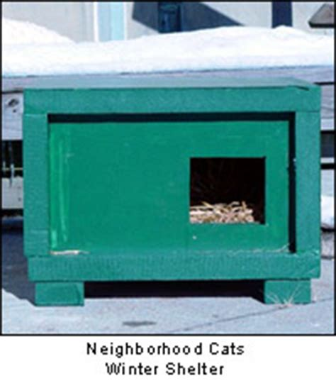 How Cold Is Too Cold For An Outdoor Cat?  Cat Advice