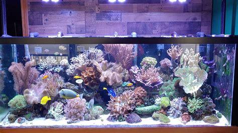 210 Gallon Reef Tank Youtube
