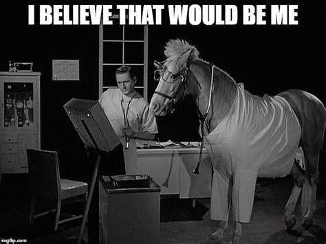 Mr Ed Meme - bad pun cow horse joke imgflip