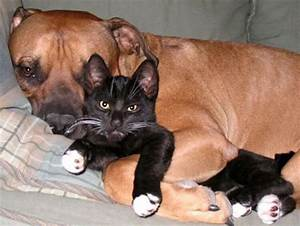 Dog And Cat Lover Nice Photos 2012 | Funny Animals