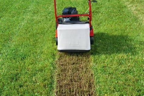 Wann Wird Rasen Vertikutiert by Vertikutieren Wann Ist Der Richtige Zeitpunkt Garten