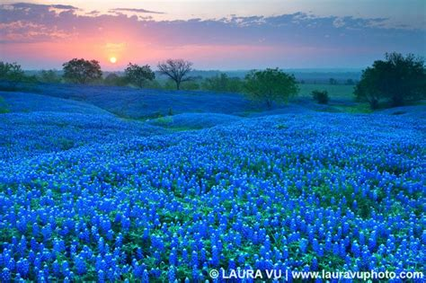 texas landscape photography texas wildflowers pictures