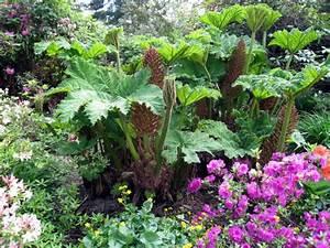 Plantes Vivaces Autour D Un Bassin : jardiner en terrain humide bassin marais tang rivi re berges ~ Melissatoandfro.com Idées de Décoration