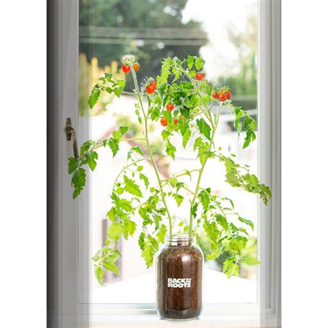 Plants In Windowsill by Back To The Roots Self Watering Planter Organic Cherry