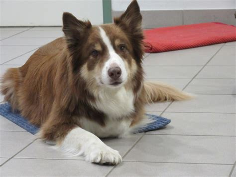 Tür 16 Hund In Kistenauf Decken Schicken  Tiere Als