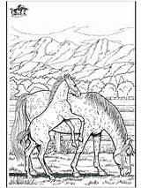 Horse Coloring Racing Race Printable Getcolorings Getdrawings sketch template