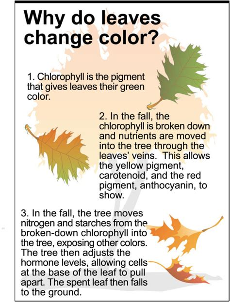 why do leaves change color in fall why do leaves change color and fall it all