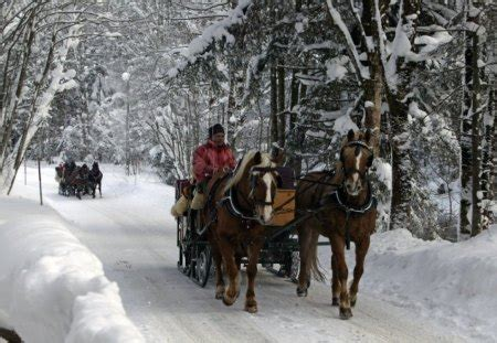 sleigh ride winter nature background wallpapers